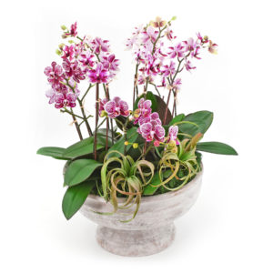 Palmer's Flowers: Orchids Galore