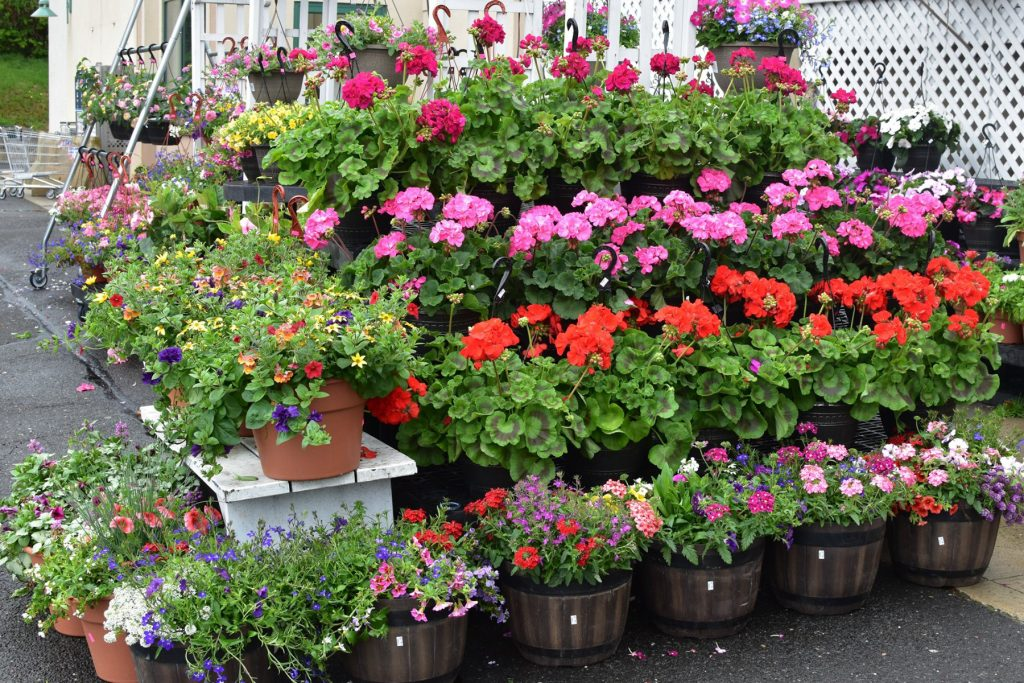 Palmers Market – Store Gallery – Flowers – -03