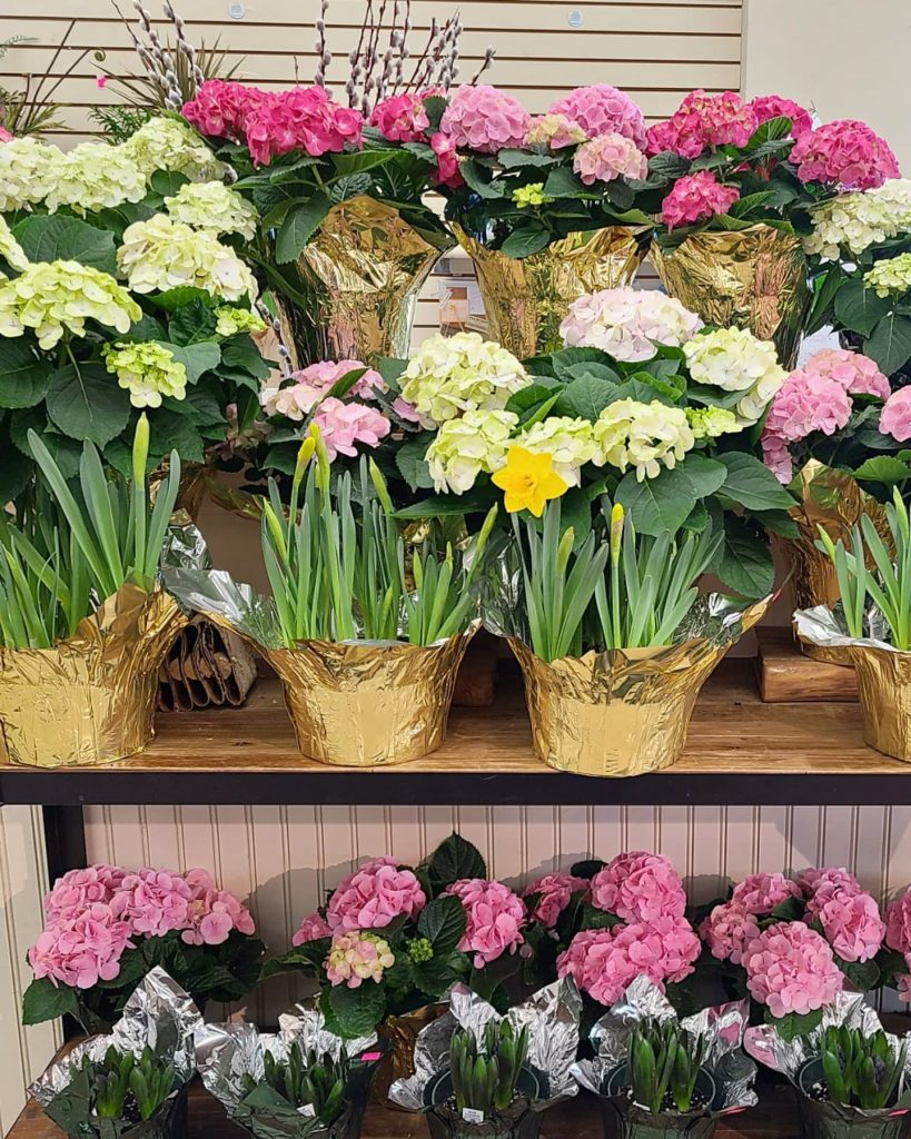 Palmers Market – Store Gallery – Flowers – -07