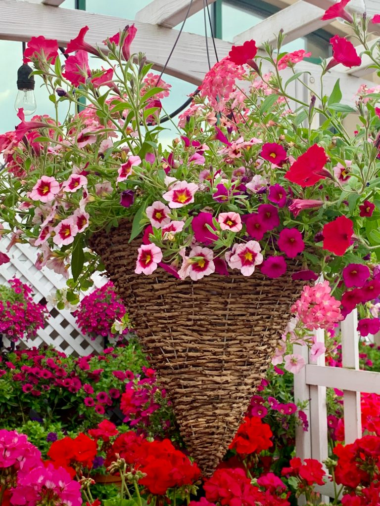 Palmers Market – Store Gallery – Flowers – -12