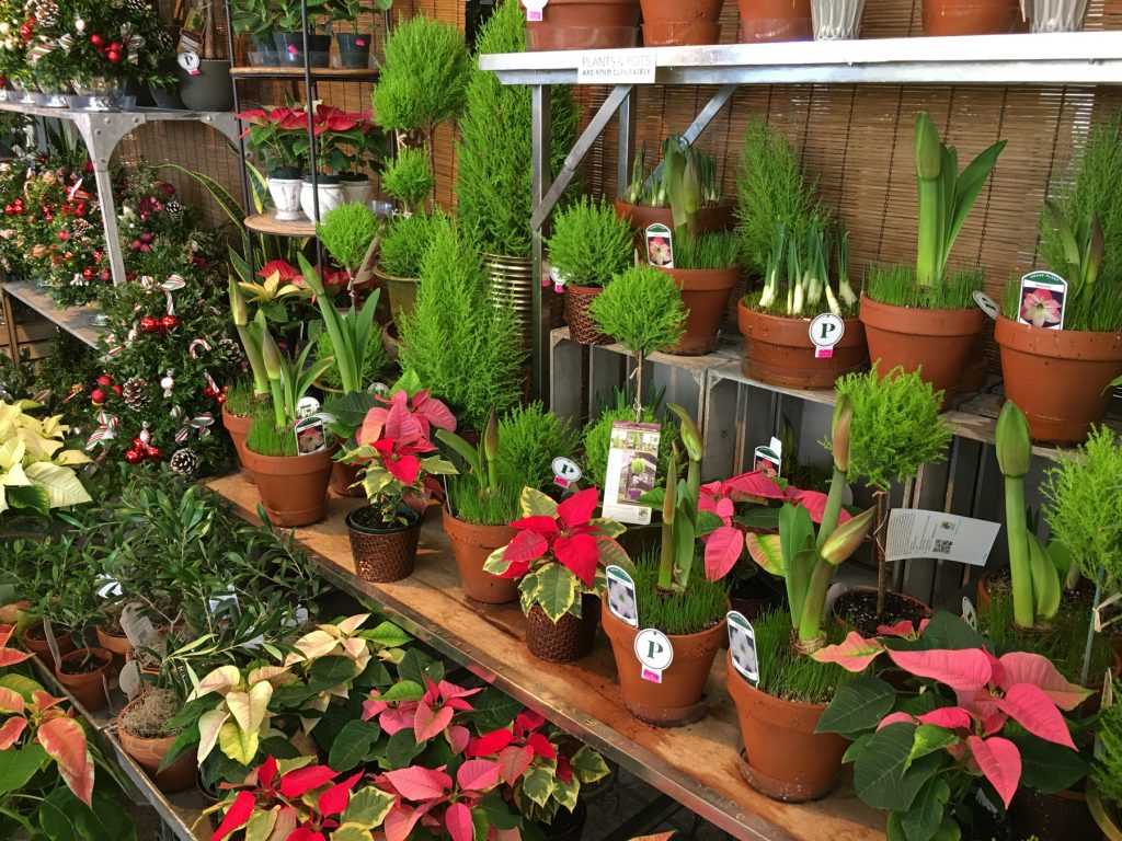 Palmers Market – Store Gallery – Flowers – -14