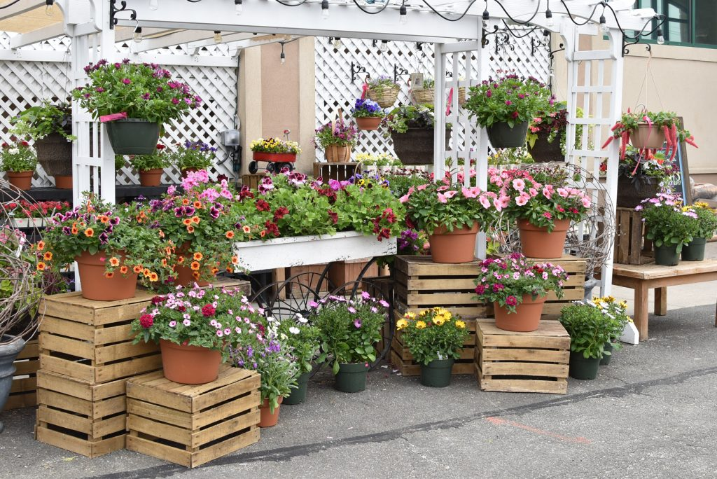 Palmers Market – Store Gallery – Flowers – -17